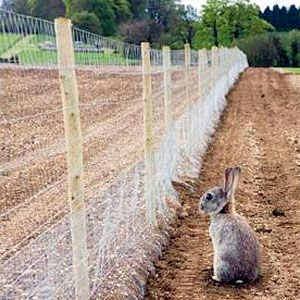 How To Keep Rabbits Out Of Garden Best Expert Tips Every Gardener
