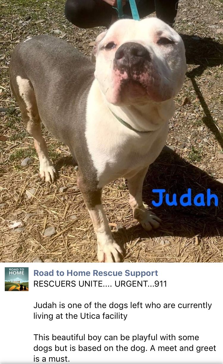 6 16 19 Judah And His Friends Need Urgently Out Of The Utica