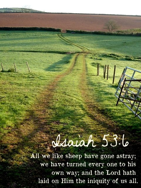 Image result for all we like sheep have gone astray images kjv