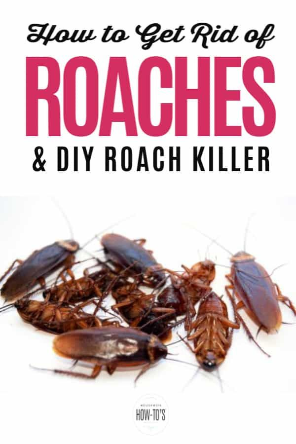 how to get rid of roaches in your home