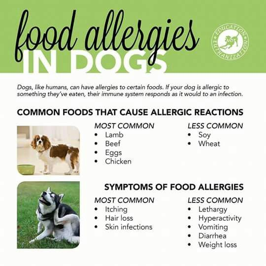 Pin By Teri Haase On Dog Nutrition And Weight Dog Allergies