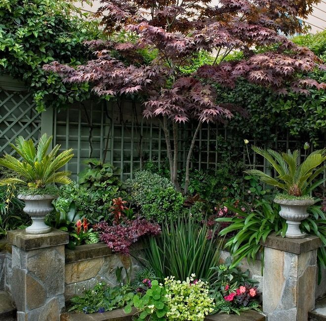 Trees For Small Spaces: Plants Can Work In Conjunction With Fences Or Walls To