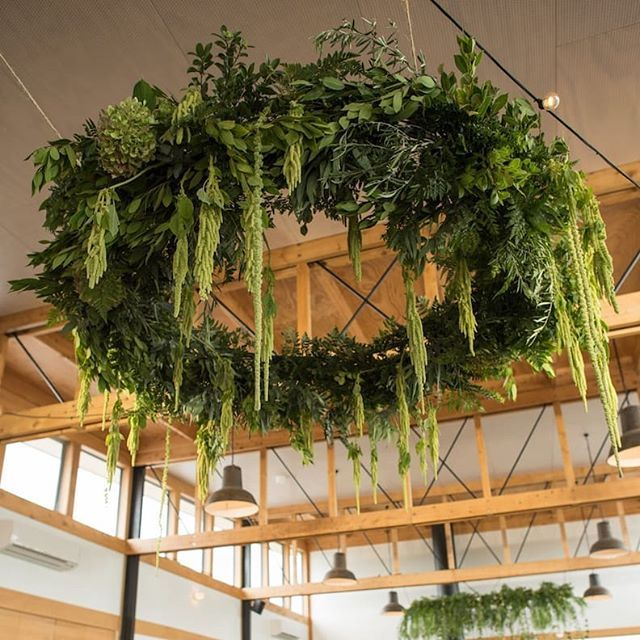 Bridal Shoes Auckland New Zealand: Huge Greenery Hanging Chandelier With Draping Amaranthus