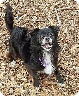 Pin On Senior Pet Alert