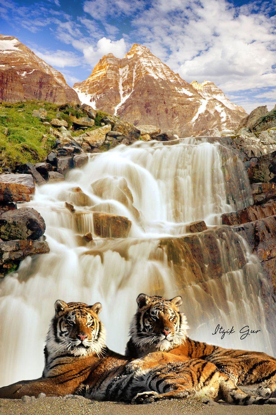 pair tigers lying in waterfallitzikgur on deviantart | tigers