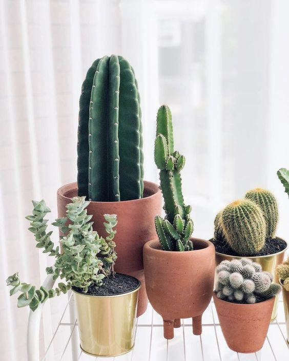 10 Fascinating Shade Loving Plants To Decorate Your Indoors