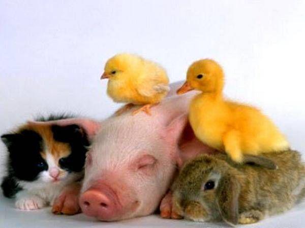 bundle of cuteness