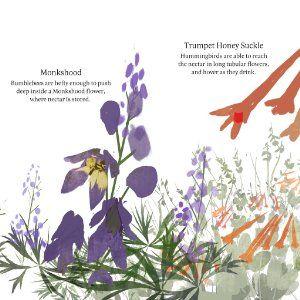 Flowers Are Calling Flowers Monkshood Illustration