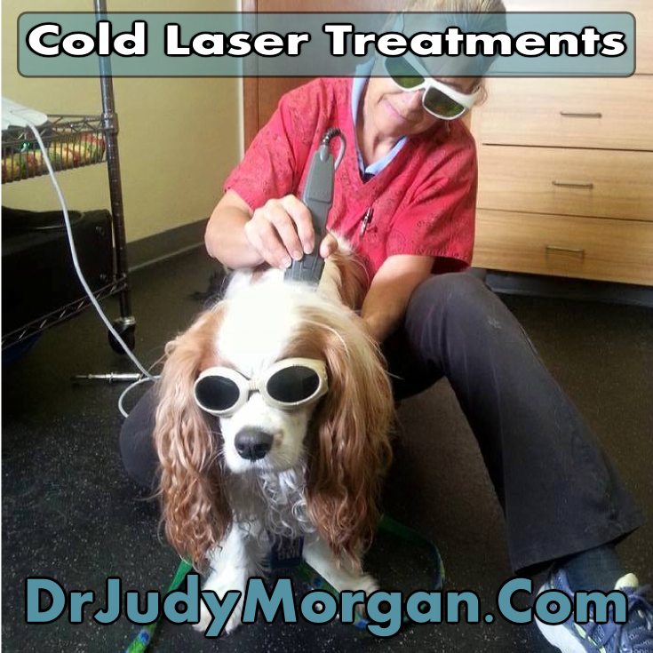 Cold laser therapy has been used in human medicine for