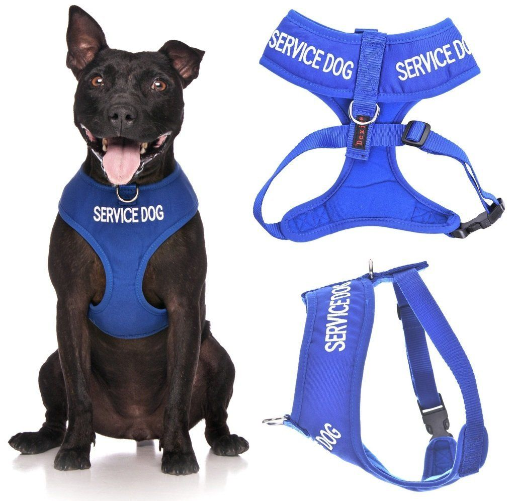 Service Dog Do Not Disturb Dog Is Working Blue Color Coded Non