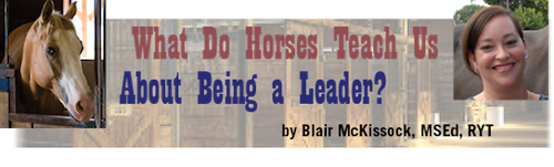 What Do Horses Have to Teach Us About Being a Leader?, by Blair McKissock