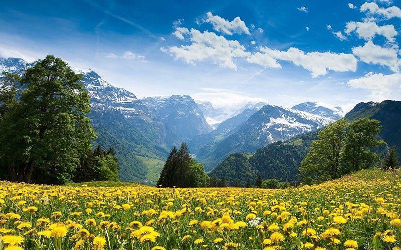 Descargar 1920x1080 flores montañas paisajes Campos dientes de león suiza flores amarillas 1920x1080 fondo de pantalla en 2020 | Paisaje campo, Paisajes, Flores amarillas