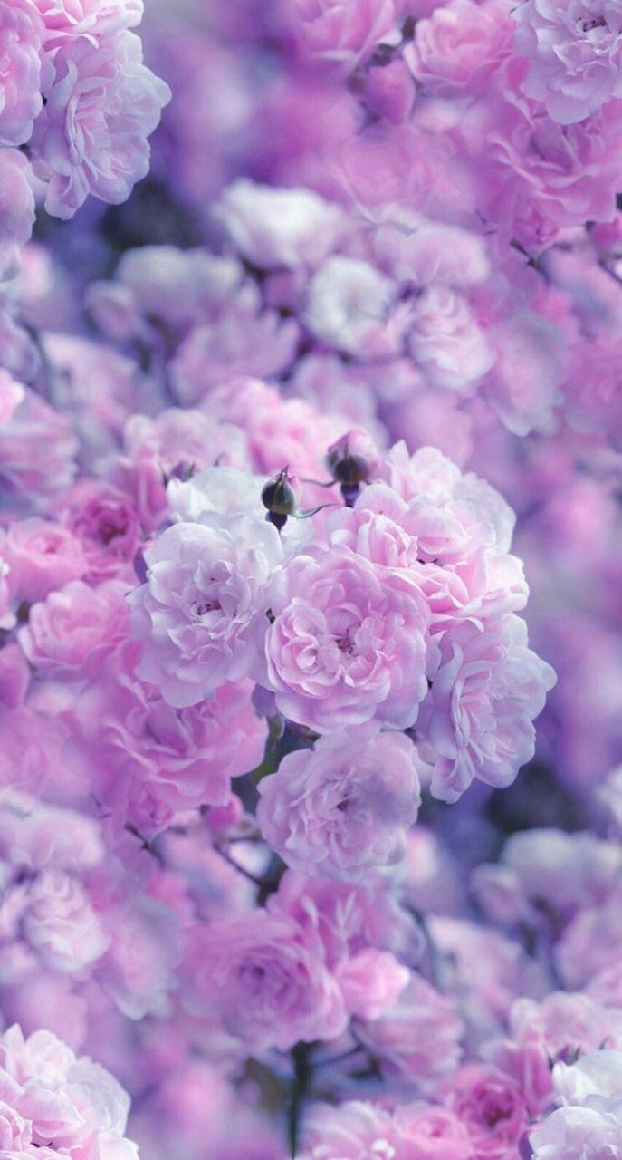 Find Beauty Everywhere Purple Flowers Wallpaper Purple Wallpaper Nature Wallpaper Amazing light purple flower wallpaper