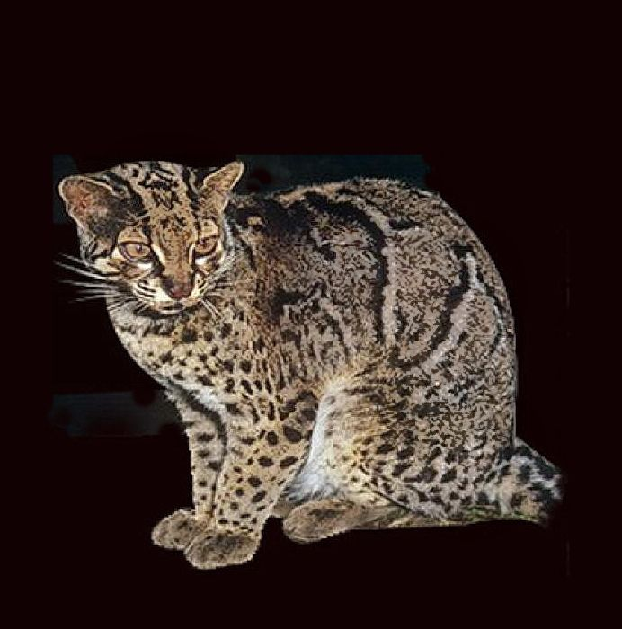 Pin On Marbled Cat