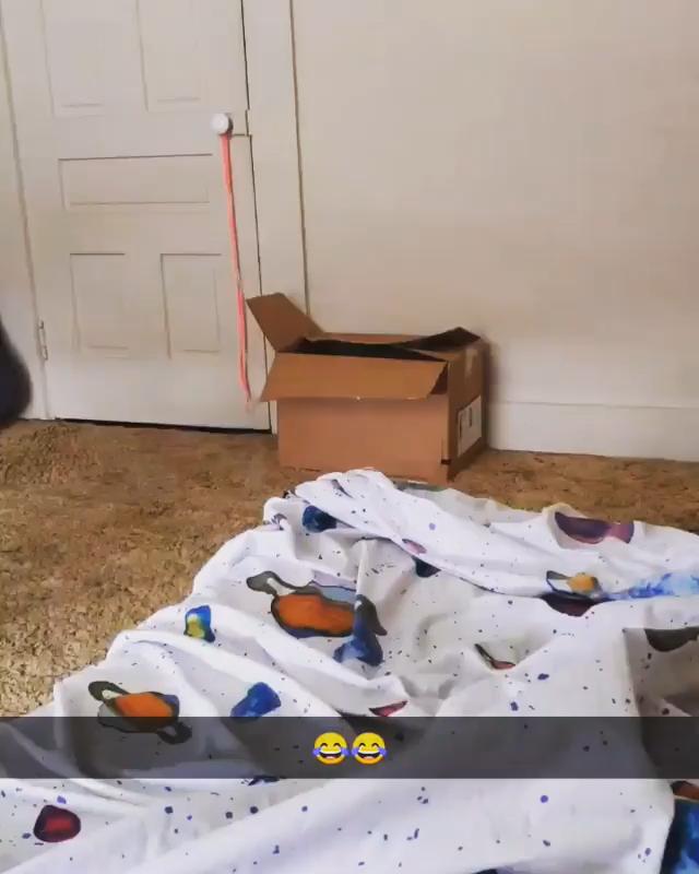 Happy cats videos
