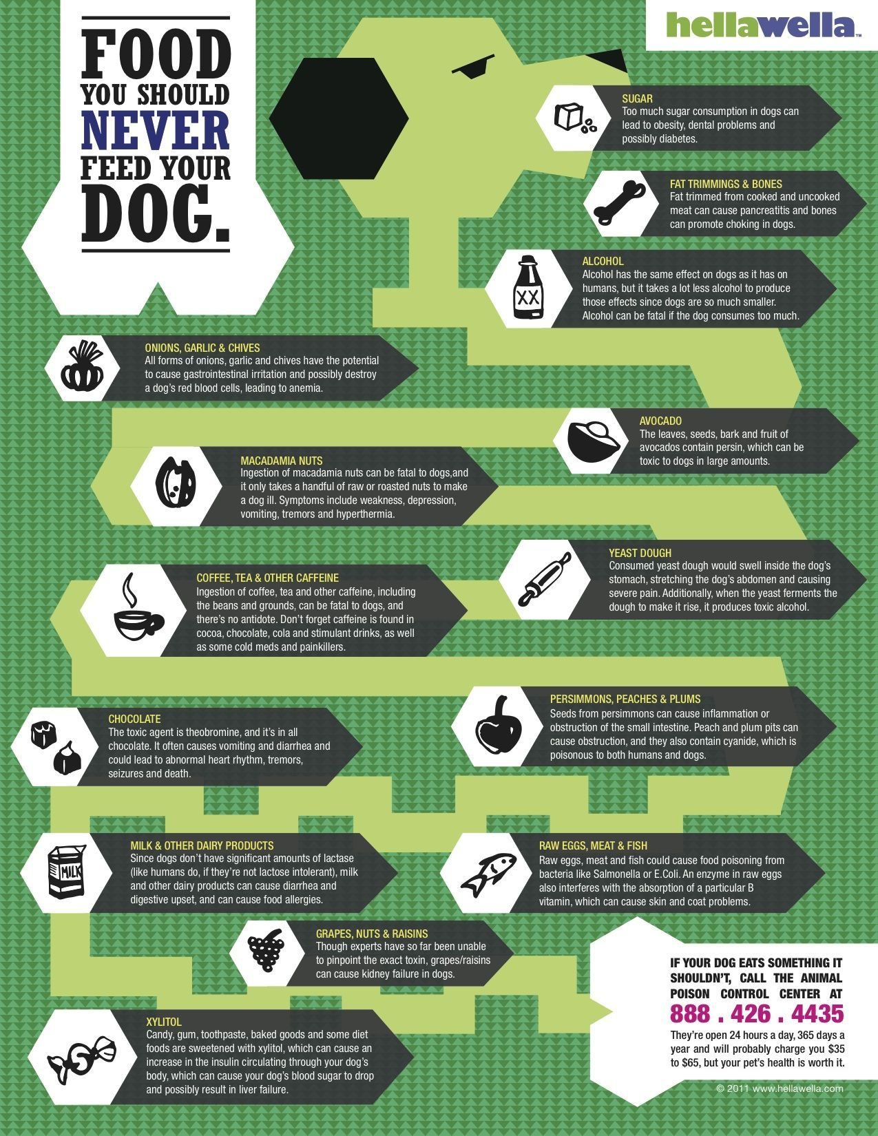 This Picture Shows That These Human Foods Should Not Be Eaten By Dogs Dog Infographic Pet Hacks Your Dog