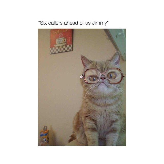 Imslaying On Instagram Lmao Funny Animal Pictures Funny Cat Pictures Funny Cat Memes