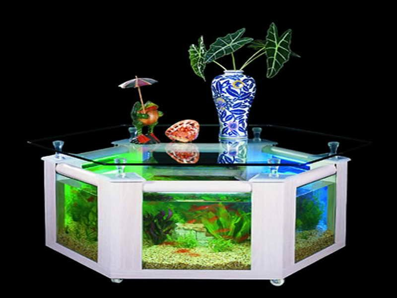 fancy fish tanks | arlene designs