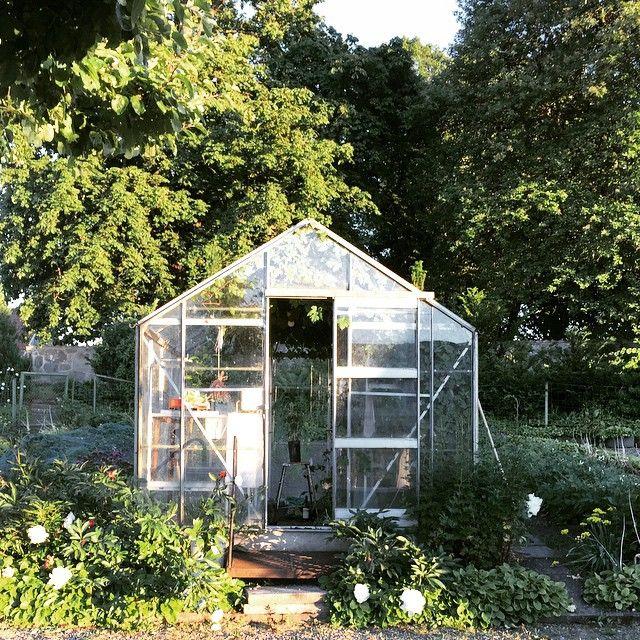 In the garden - här gror växter och frodas  #sommar #summer #svenskahem #trädgård #garden #grow #odla #skåne #sweden #växthus #drivhus #greenhouse #home #hemma #hem