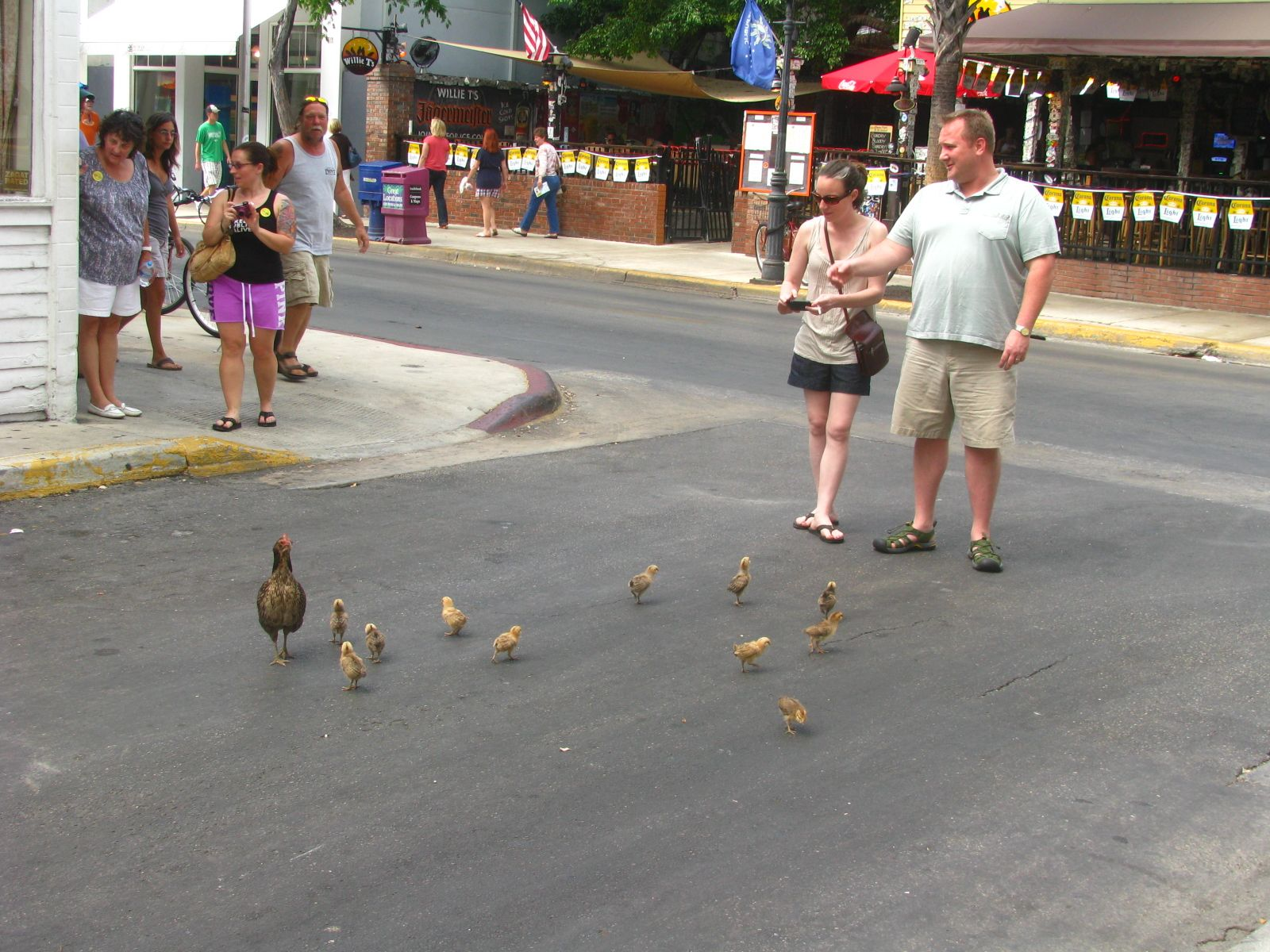 key west | Neighborhoods of Key West | Pinterest | Chicken Runs, Key ...
