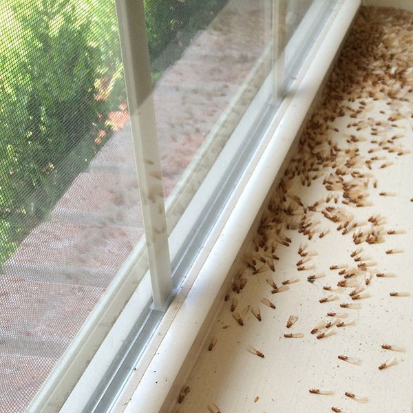 The Hidden Cost Of Neglecting A Termite Inspection Spears Pest Control Termites Termite Inspection Termite Control