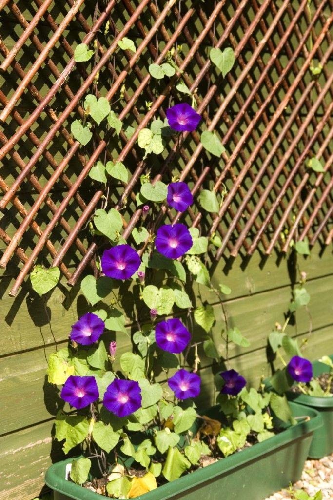 27 Garden Trellis And Lattice Ideas Wood Metal Diy Garden Trellis Climbing Flowers Garden Trellis