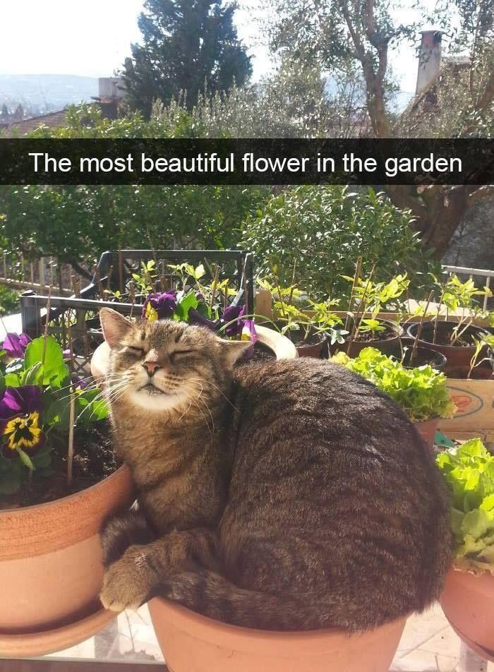 101% waarheid! ? Klik op de foto voor meer! #catloverscommunity - BildersPin #funnykittens