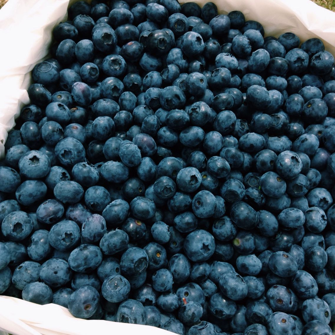 Blueberries are definitely one of the best fruit!!