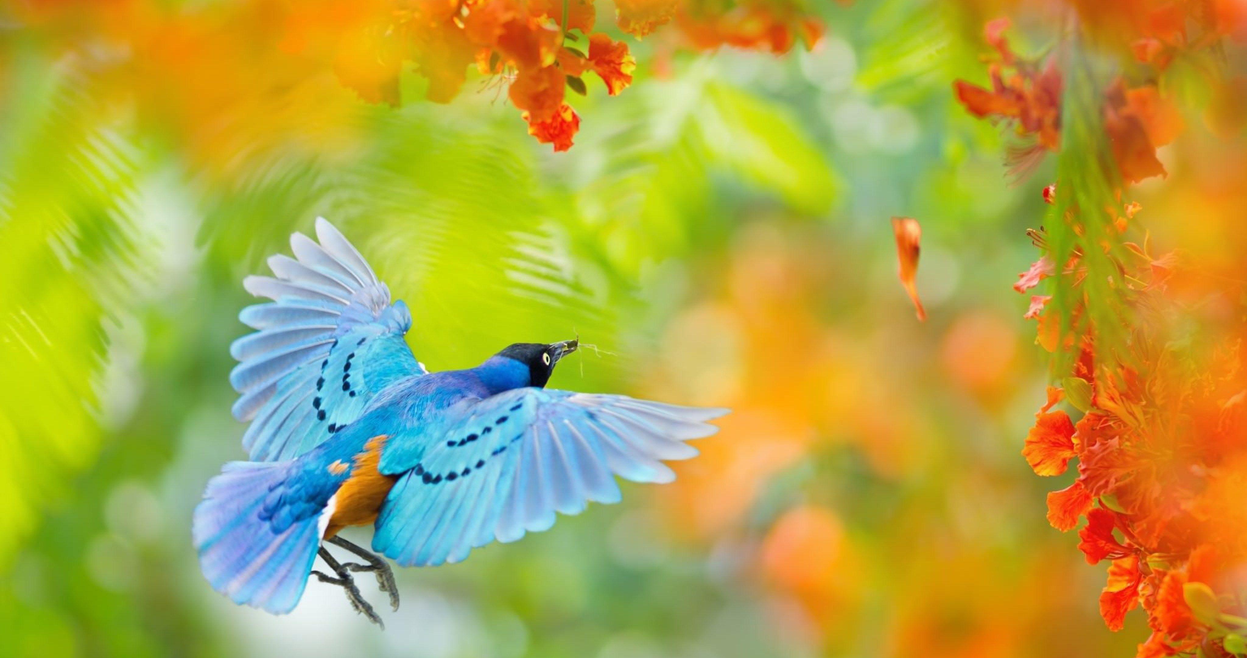 Flying Bird In Africa 4k Ultra Hd Wallpaper Birds Flying Beautiful Birds Birds
