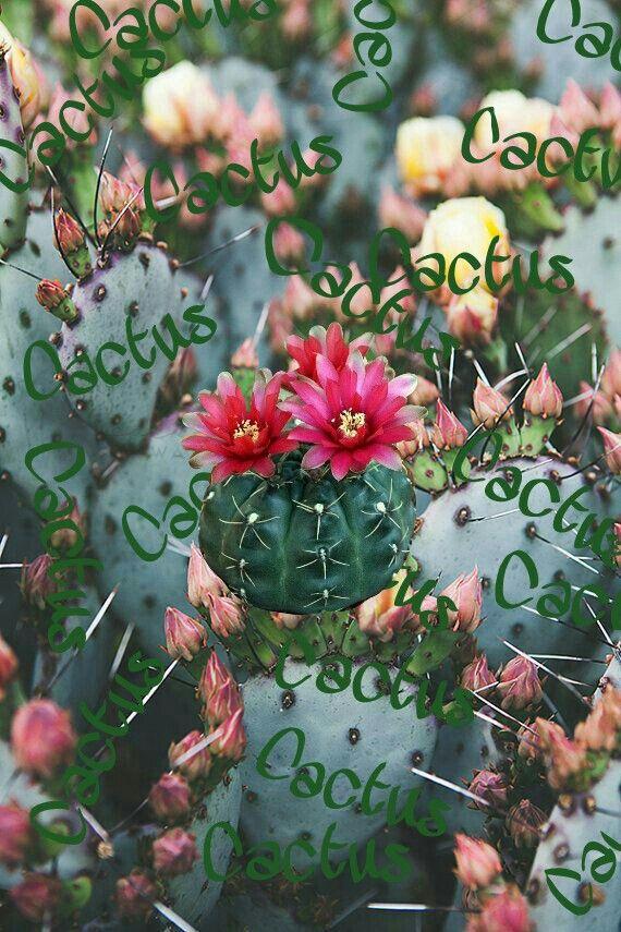 Fondos de pantalla Verde Cactus Fondos para iPhone fondos ...