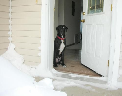 Does Your Dog Bark Whenever Guests Arrive Here S How To Stop Dog