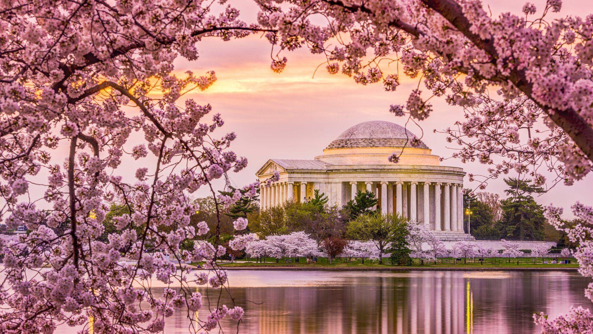 Paisajes Kentucky Busqueda De Google Cherry Blossom Festival Dc Cherry Blossom Pictures Cherry Blossom Washington Dc