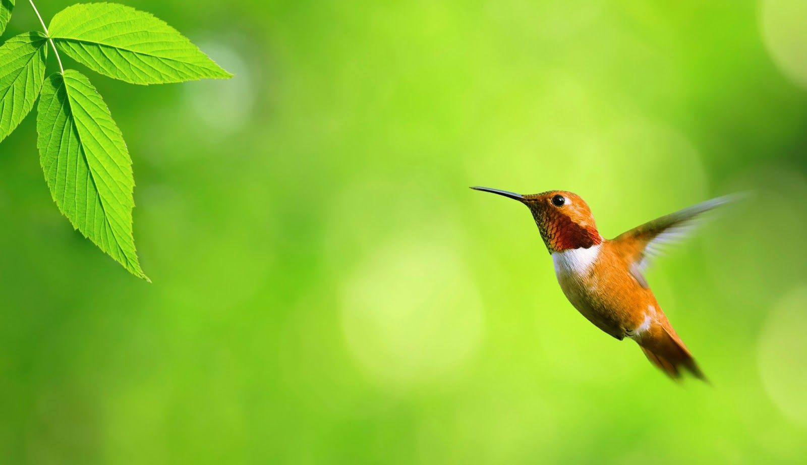 Birds Wallpapers High Resolution