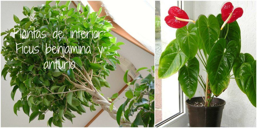 Descubre las 2 plantas de interior m s f ciles de cuidar - Plantas de interior nombres ...