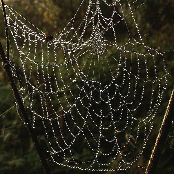 """Spiderweb glistens in the rain like nature""""s gems"""