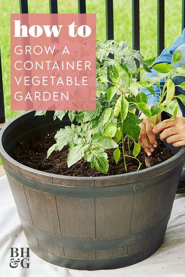 Use our tips and tricks to learn everything you need to know before planting your own container vegetable garden. #gardening #gardenideas #containergardening #bhg