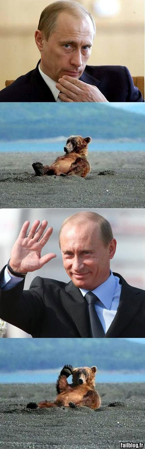 Bear and stalin meme
