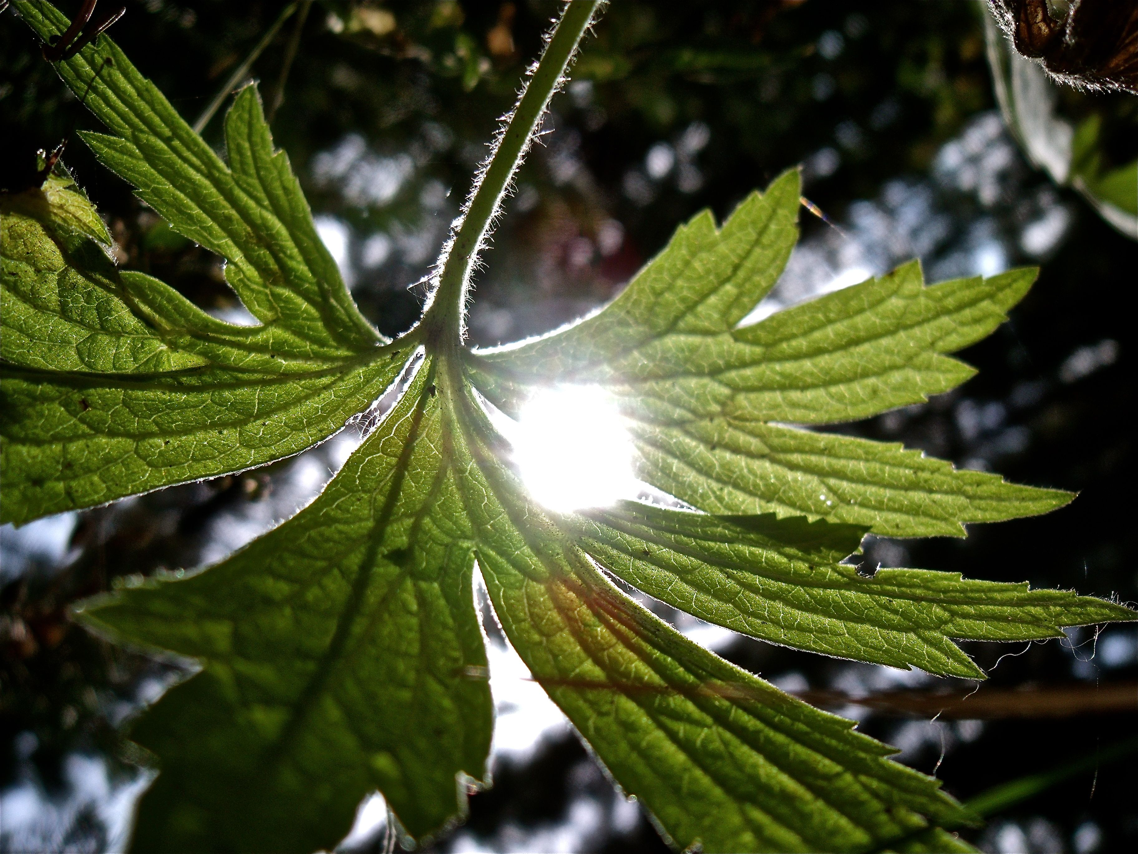 probably one of my favorite photos I've ever taken, from the underside of a leaf