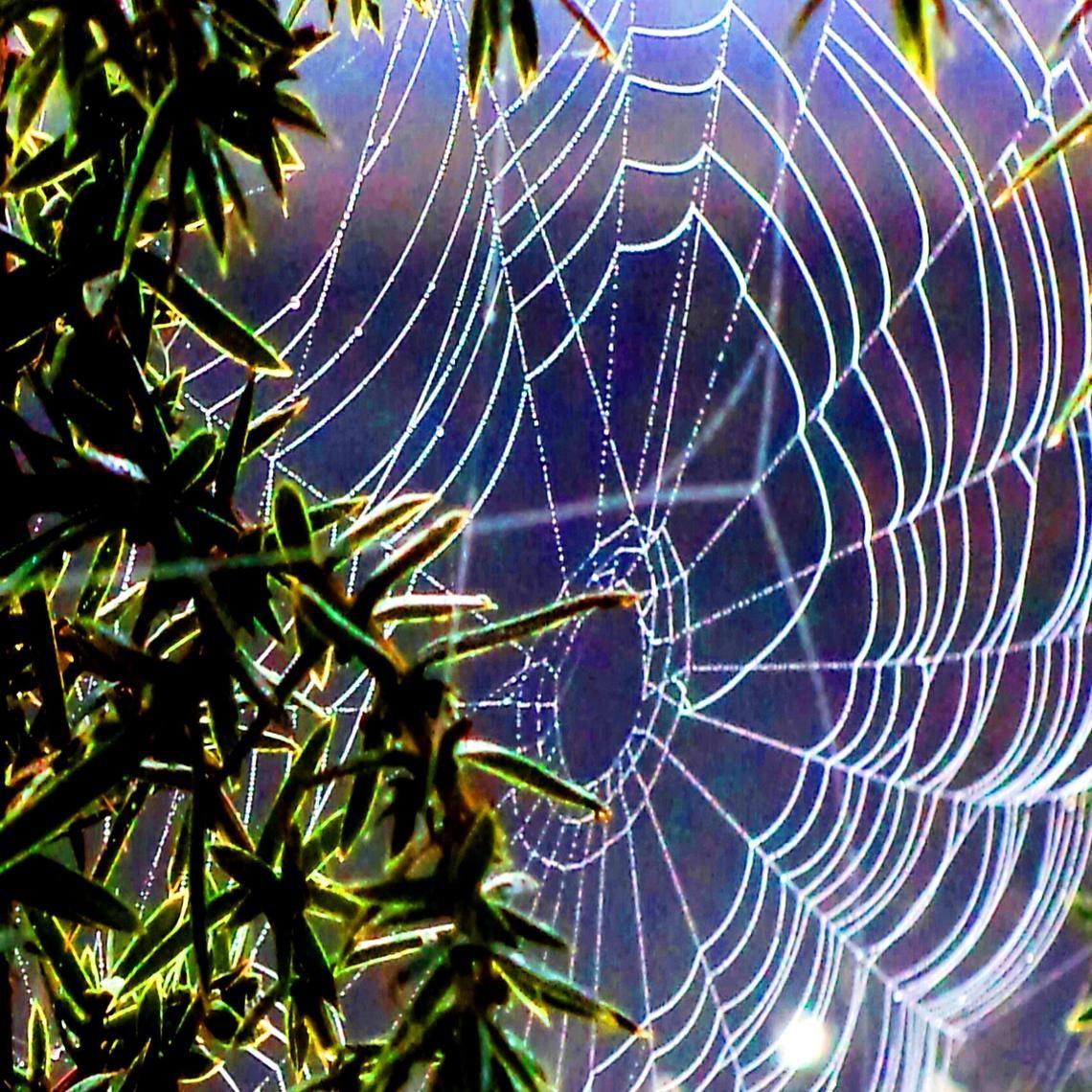 Das Spinnengewebe