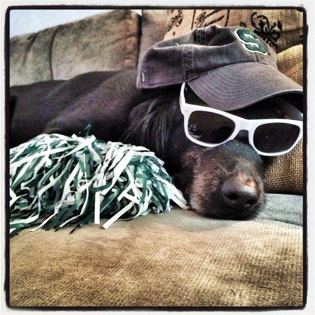 Just another Sunday with Harley...... #dogsofinstagram #michiganstate #spartans #dogsofMSU #SundayFunday #Padgram