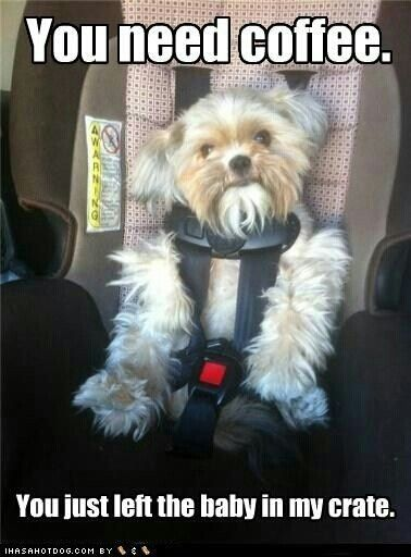 Bad Morning Not A Morning Person Funny Animal Pictures Funny Meme Pictures Funny Dog Pictures