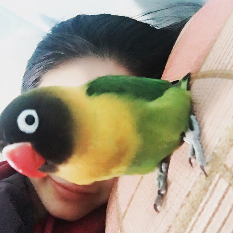 모닝 셀카 는 안돼 주인님 생얼보호 #goodmorning #parrot by jje1112 http://www.australiaunwrapped.com/