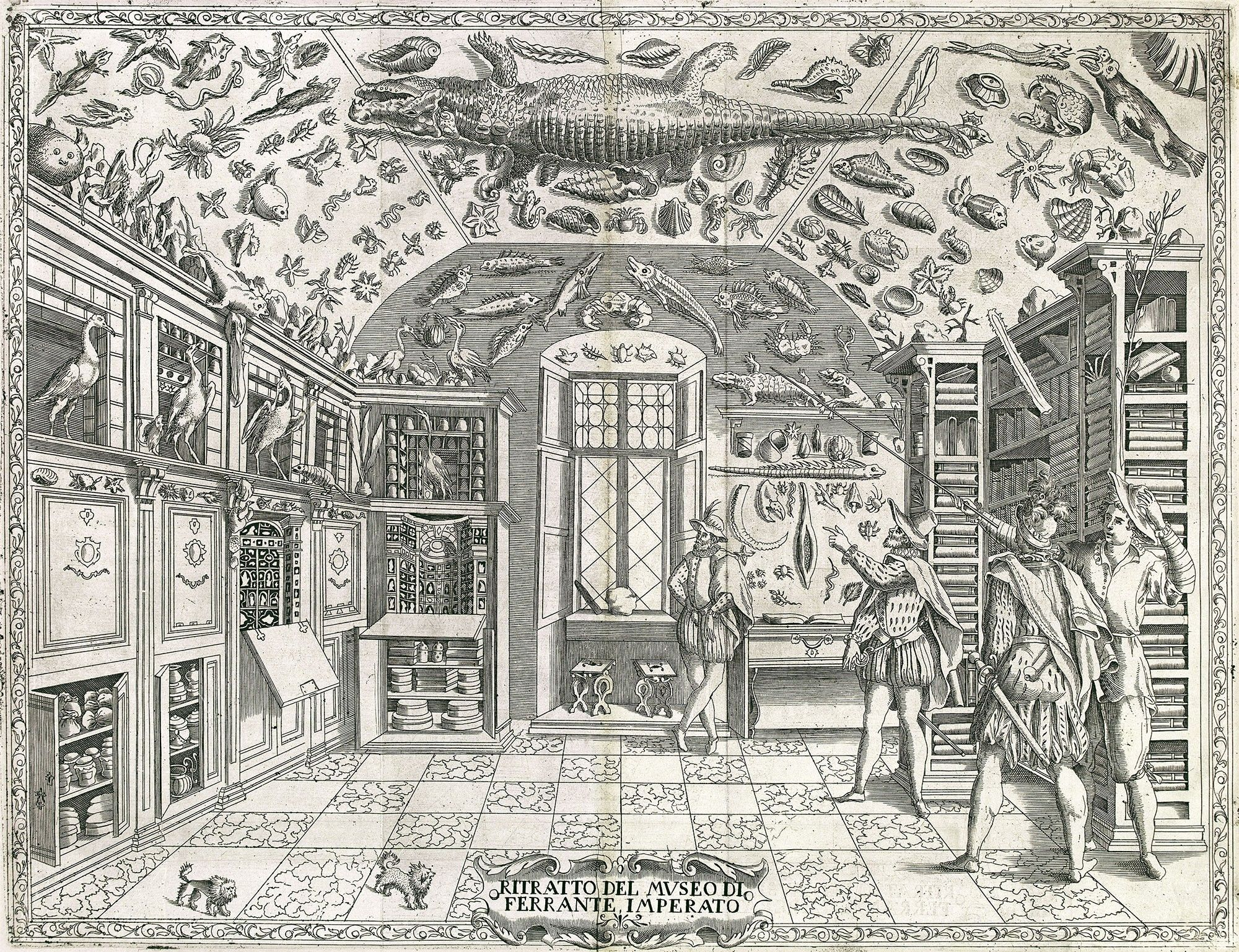 Cabinet Of Wonders Fold Out Engraving From Ferrante Imperatos Dellhistoria Naturale