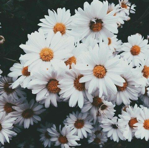 photography  hipster  indie  grunge  v s c o  Flower