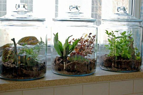 Glas-terrarien indoor garten nachhaltige-begrünung ideen-modern ...