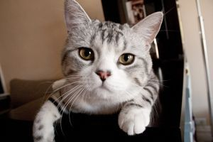 Grey Tabby Cat Names Cat Names City Grey Tabby Cats Tabby Cat Names Grey Cat Names