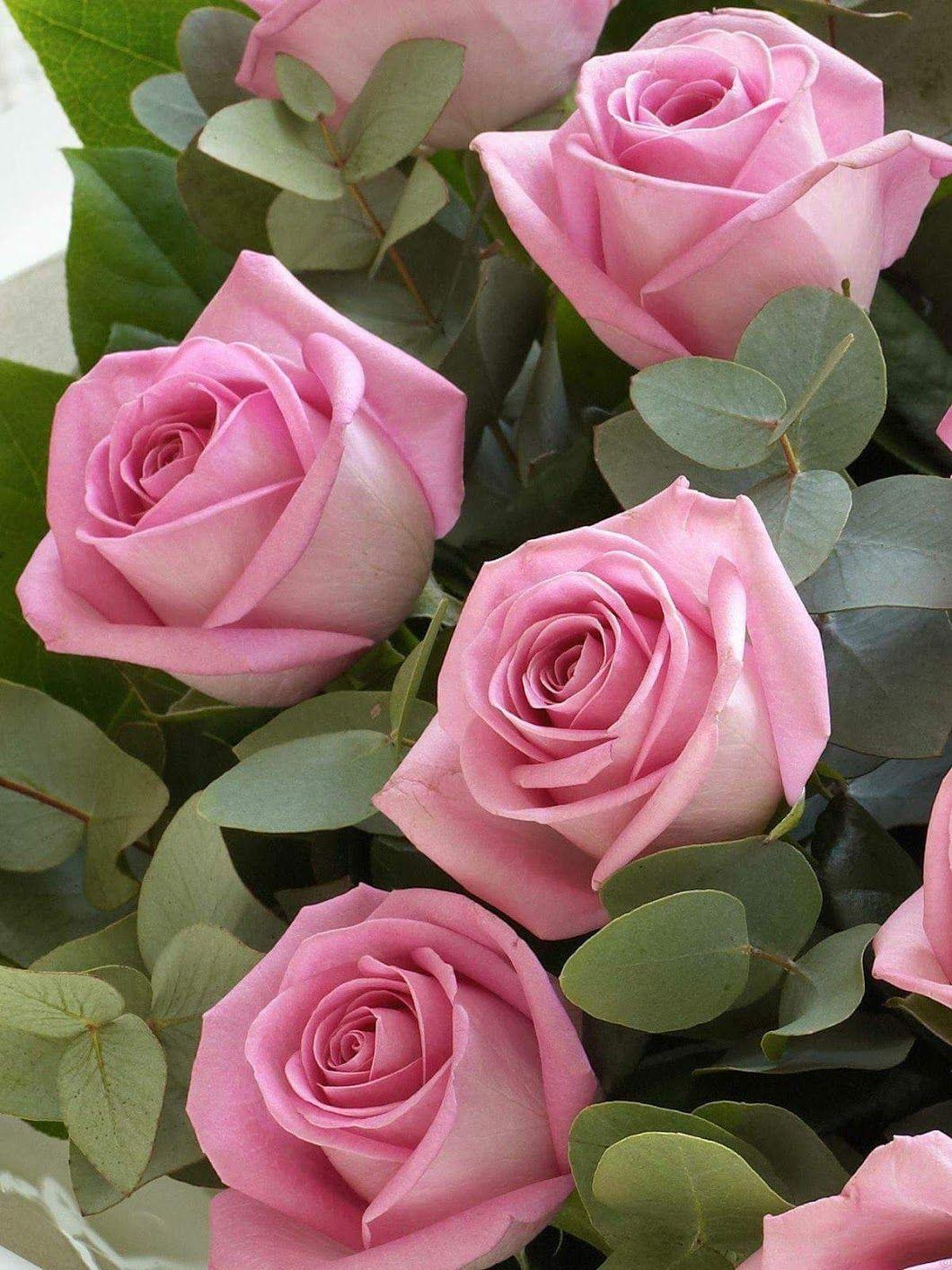 N nal jardin aliss pinterest flores roseiras e - Lavori in casa prima del rogito ...