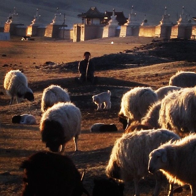 #Sheperd watching his flock at #sunset in #Karakorum #Mongolia . #travel  (at Karakorum Mongolia) ShamelessTraveler.com