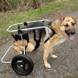Disabled Dogs For Adoption Disabled Dog Dogs Pets