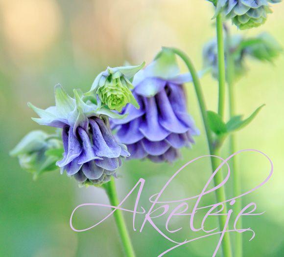 I haven hos Evigglade ♥: Den skønneste i min have lige nu